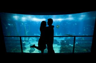 Aquarium Couple | Couples VIP Aquarium Package at Loews Atlanta Hotel