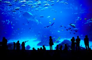 Family VIP Aquarium Package at Loews Atlanta Hotel