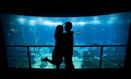 Couples VIP Aquarium Package: Tickets & Parking