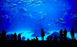 Family VIP Aquarium Package: Tickets & Parking